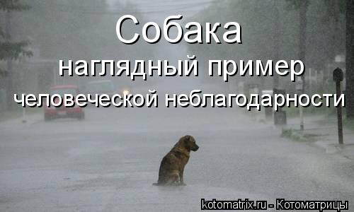 Котоматрица: Собака наглядный пример  человеческой неблагодарности