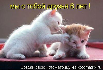 Котоматрица: мы с тобой друзья 6 лет 9 месяцев, но давай дружить ещё много лет! мы с тобой друзья 6 лет !