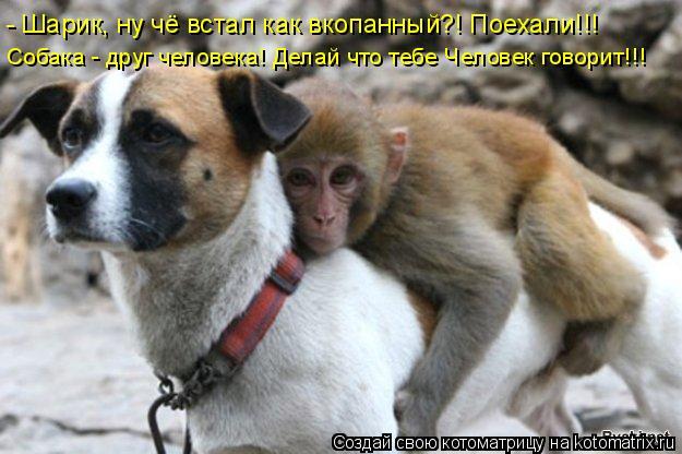 Котоматрица: - Шарик, ну чё встал как вкопанный?! Поехали!!! Собака - друг человека! Делай что тебе Человек говорит!!!