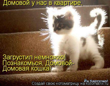 Котоматрица: Домовой у нас в квартире, Загрустил немножко! Познакомься, Домовой- Домовая кошка!