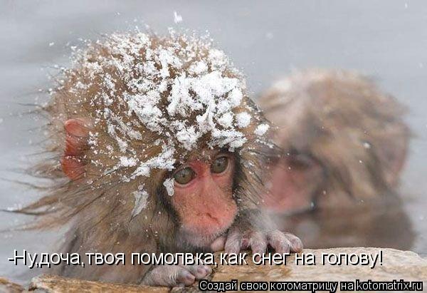 Котоматрица: -Ну,доча,твоя помолвка,как снег на голову!