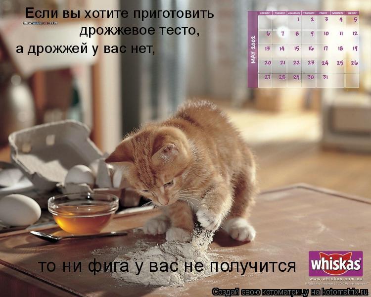 Котоматрица: Если вы хотите приготовить  дрожжевое тесто, а дрожжей у вас нет, то ни фига у вас не получится