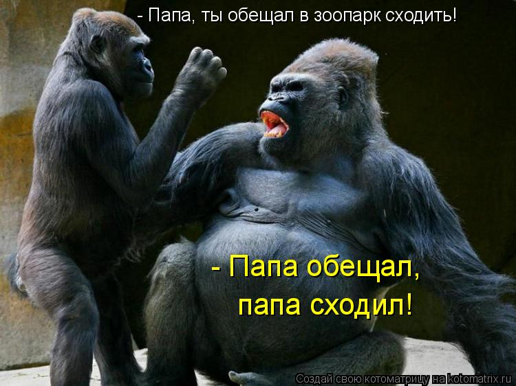 Котоматрица: - Папа, ты обещал в зоопарк сходить! - Папа обещал, папа сходил!