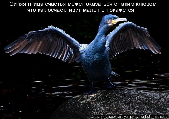 Котоматрица: Синяя птица счастья может оказаться с таким клювом что как осчастливит мало не покажется
