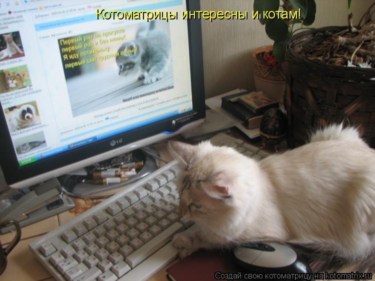 Котоматрица: Котоматрицы интересны и котам!