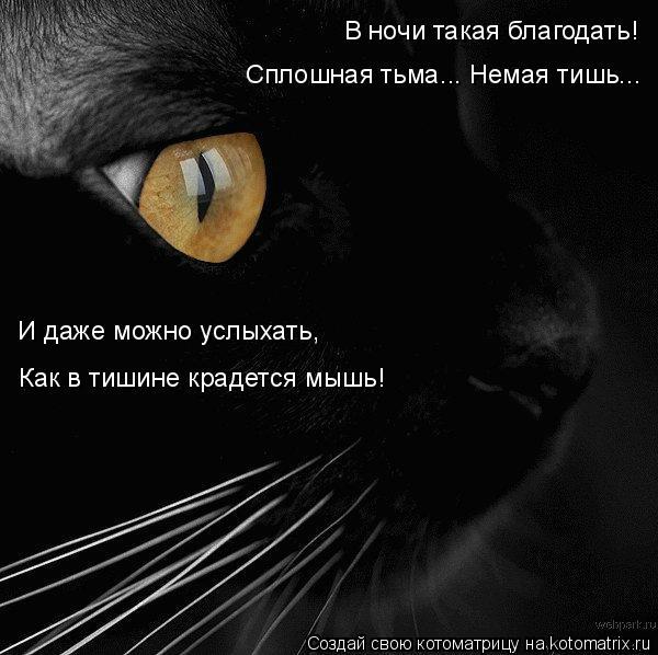 Котоматрица: В ночи такая благодать! Сплошная тьма... Немая тишь... И даже можно услыхать, Как в тишине крадется мышь!