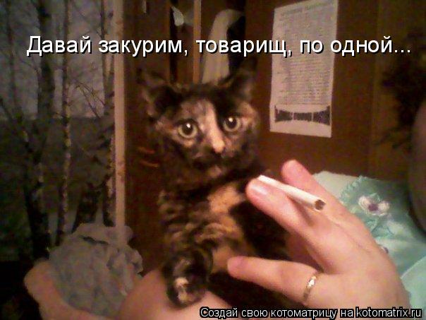 Котоматрица: Давай закурим, товарищ, по одной...