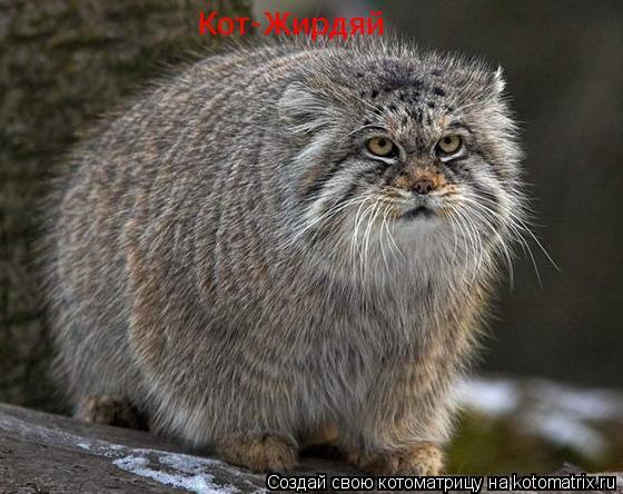 Котоматрица: Кот-Жирдяй