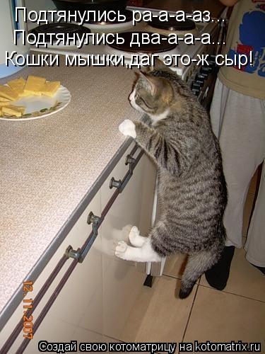 Котоматрица: Подтянулись ра-а-а-аз... Подтянулись два-а-а-а... Кошки мышки,даг это-ж сыр!