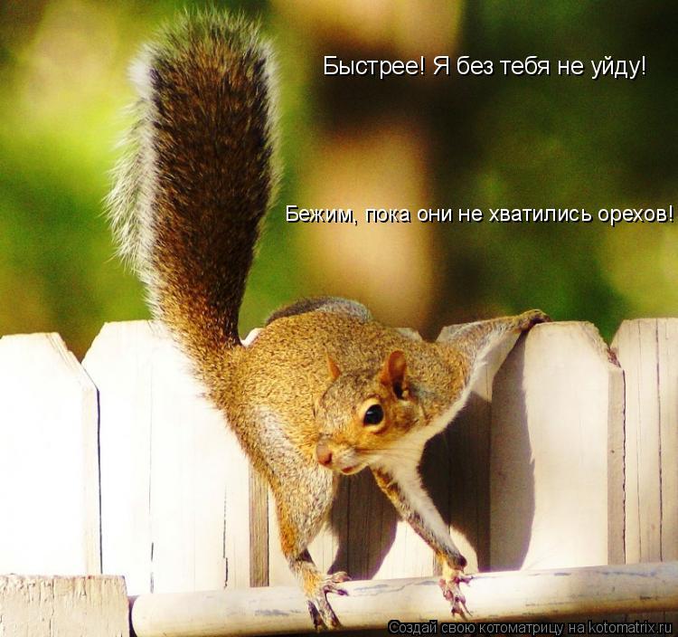 Котоматрица: Быстрее! Я без тебя не уйду! Бежим, пока они не хватились орехов!
