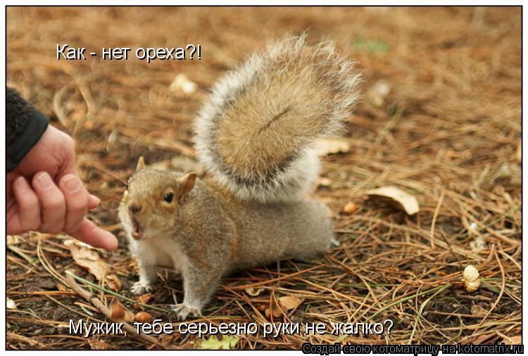 Котоматрица: Как - нет ореха?! Мужик, тебе серьезно руки не жалко?