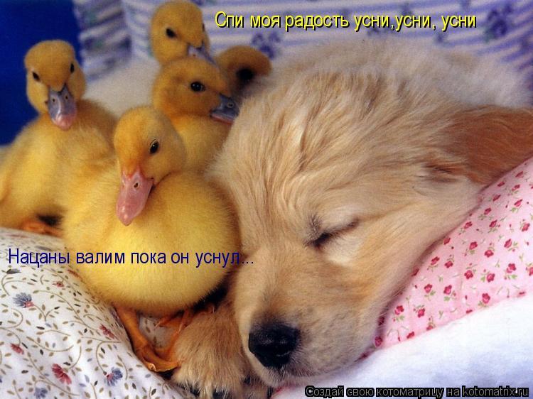 Котоматрица: Спи моя радость усни,усни, усни Нацаны валим пока он уснул...