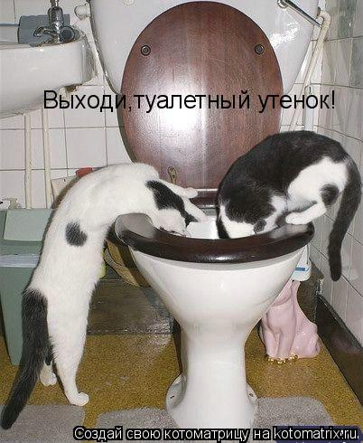 Котоматрица: Выходи,туалетный утенок!