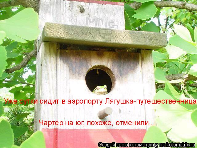 Котоматрица: Уже сутки сидит в аэропорту Лягушка-путешественница  Чартер на юг, похоже, отменили...