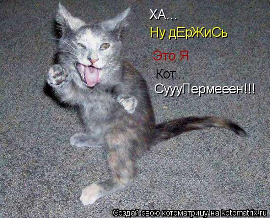 Котоматрица: ХА... Ну дЕрЖиСь Это Я Кот... СуууПермееен!!!