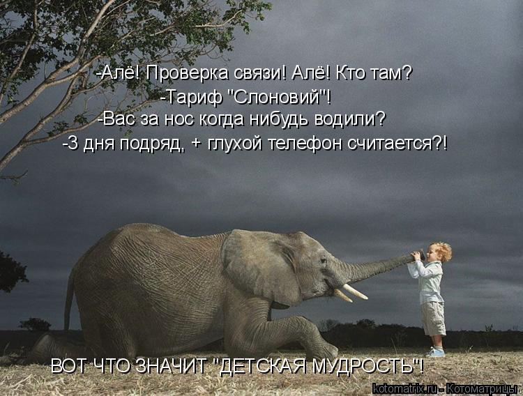 "Котоматрица: -Алё! Проверка связи! Алё! Кто там? -Тариф ""Слоновий""! -Вас за нос когда нибудь водили? -3 дня подряд, + глухой телефон считается?! ВОТ ЧТО ЗНАЧИТ """