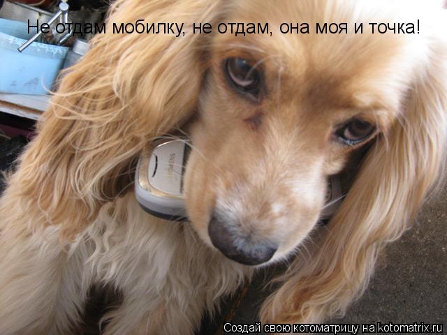 Котоматрица: Не отдам мобилку, не отдам, она моя и точка!