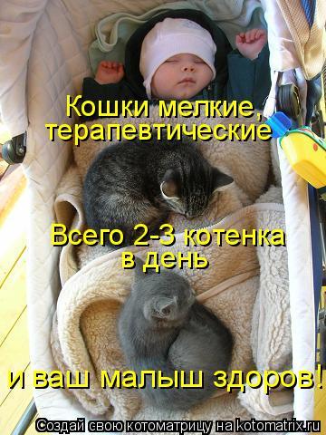 Котоматрица: Всего 2-3 котенка в день и ваш малыш здоров! Кошки мелкие, терапевтические