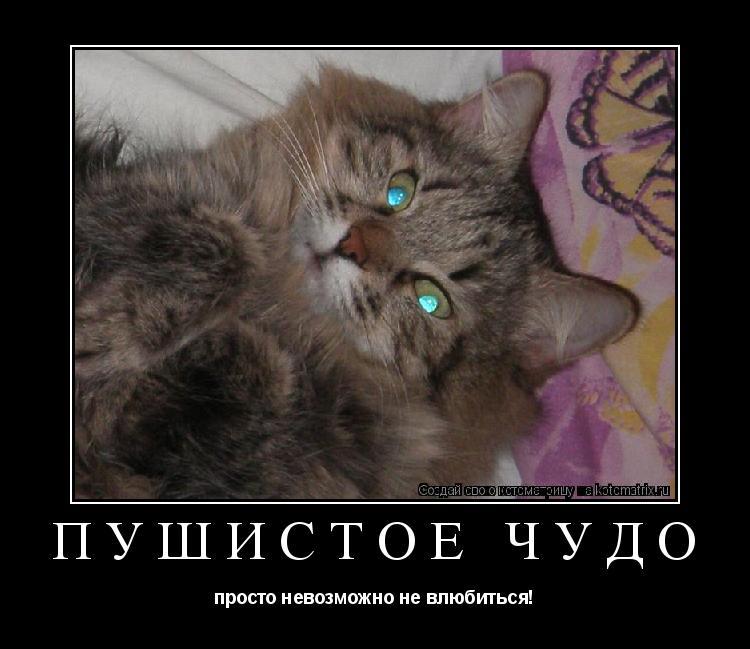 Котоматрица: Пушистое чудо просто невозможно не влюбиться!