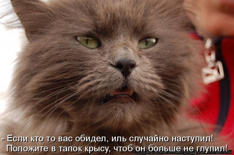 Котоматрица: - Если кто то вас обидел, иль случайно наступил! Положите в тапок крысу, чтоб он больше не глупил!