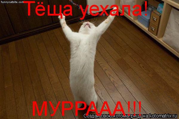 Котоматрица: Тёща уехала! МУРРААА!!!