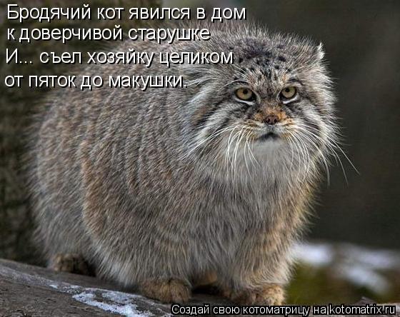 Котоматрица: Бродячий кот явился в дом к доверчивой старушке И... съел хозяйку целиком от пяток до макушки.