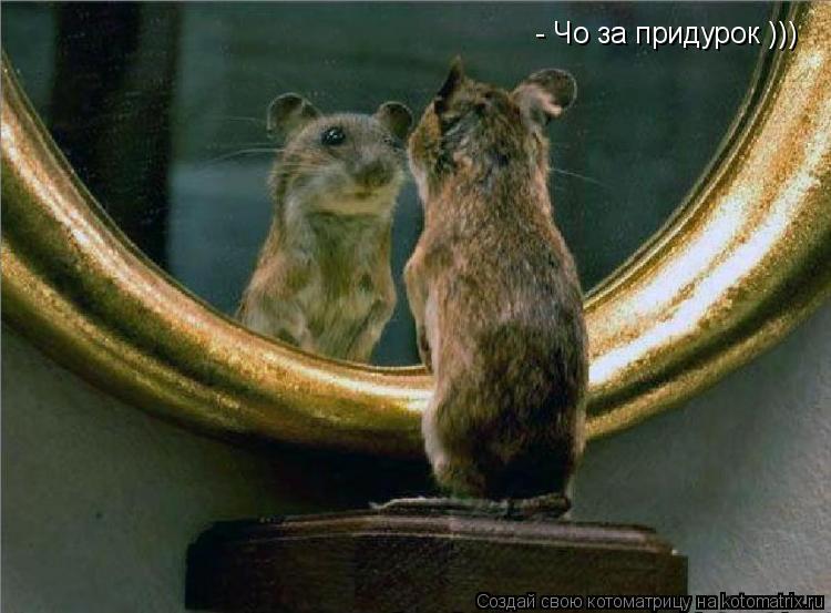 Котоматрица: - Чо за придурок )))