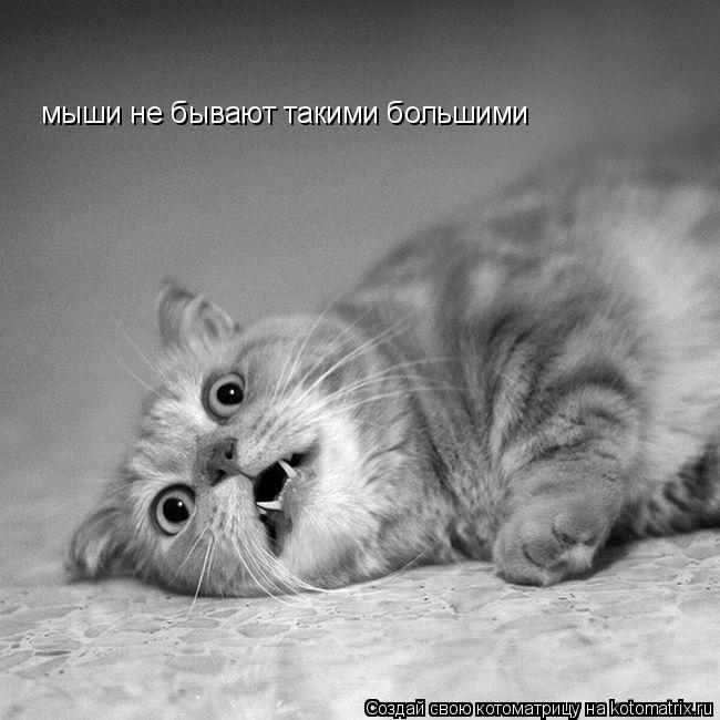 Котоматрица: мыши не бывают такими большими