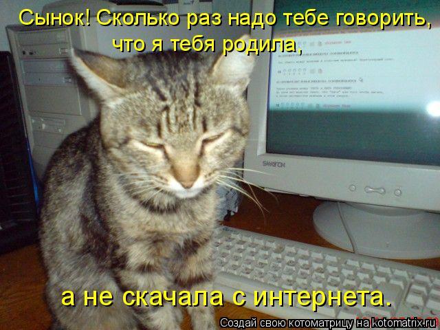 Котоматрица: Сынок! Сколько раз надо тебе говорить,  что я тебя родила,  а не скачала с интернета.