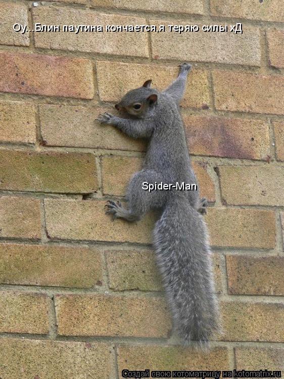 Котоматрица: Оу...Блин паутина кончается,я теряю силы хД Spider-Man