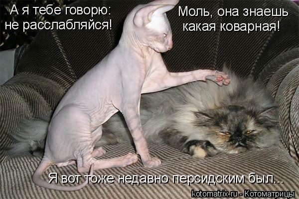 Котоматрица: А я тебе говорю: не расслабляйся! Моль, она знаешь  какая коварная! Я вот тоже недавно персидским был...