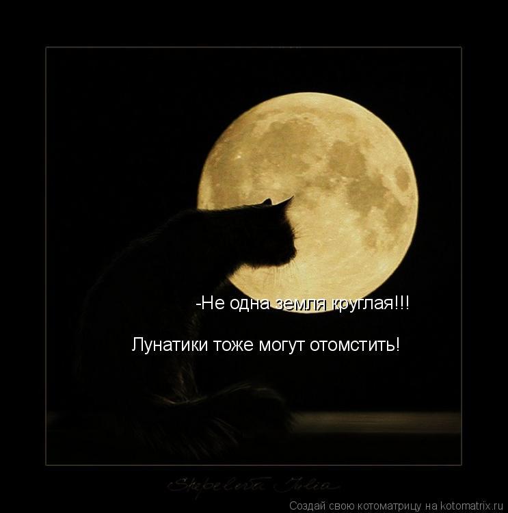 Котоматрица: -Не одна земля круглая!!!  Лунатики тоже могут отомстить!