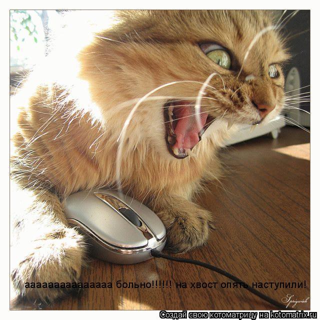 Котоматрица: ааааааааааааааа больно!!!!!! на хвост опять наступили!
