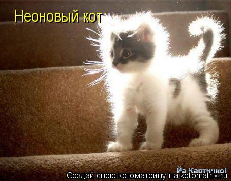Котоматрица: Неоновый кот