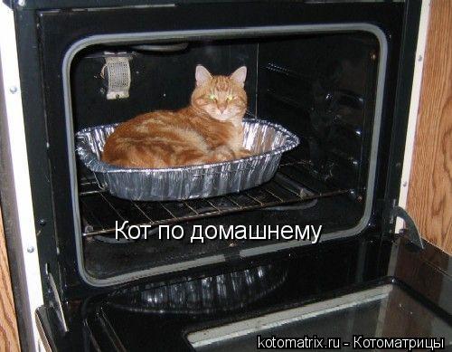 Котоматрица: Кот по домашнему