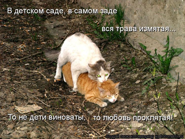 Котоматрица: В детском саде, в самом заде вся трава измятая... То не дети виноваты, то любовь проклятая!