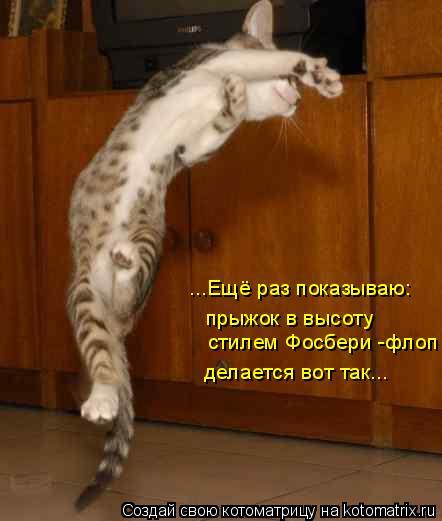 Котоматрица: ...Ещё раз показываю: прыжок в высоту делается вот так... стилем Фосбери -флоп