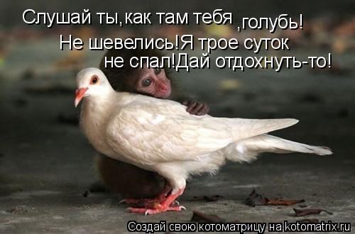 Котоматрица: Слушай ты,как там тебя ,голубь! Не шевелись!Я трое суток не спал!Дай отдохнуть-то!
