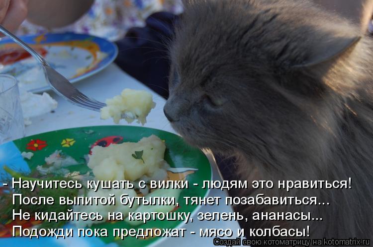 Котоматрица: - Научитесь кушать с вилки - людям это нравиться! После выпитой бутылки, тянет позабавиться... Не кидайтесь на картошку, зелень, ананасы... Под