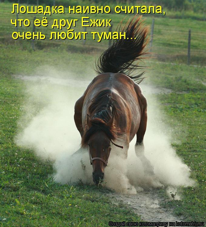 Котоматрица: Лошадка наивно считала, что её друг Ежик очень любит туман...