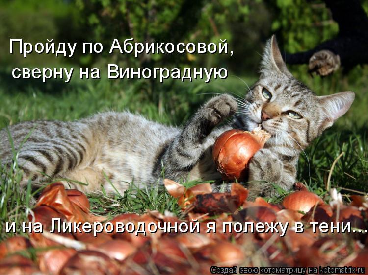 Котоматрица: Пройду по Абрикосовой, сверну на Виноградную и на Ликероводочной я полежу в тени...