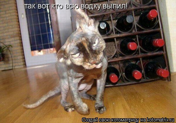 Котоматрица: так вот кто всю водку выпил!