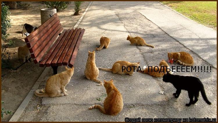 Котоматрица: РОТА, ПОДЪЕЕЕЕМ!!!!!