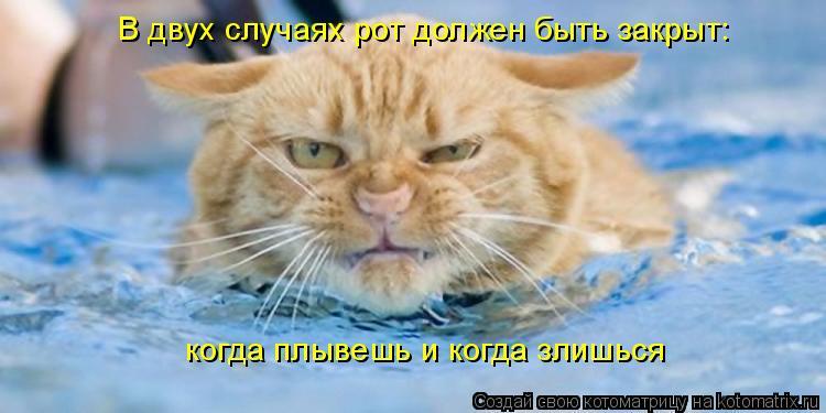 Котоматрица: В двух случаях рот должен быть закрыт:  когда плывешь и когда злишься