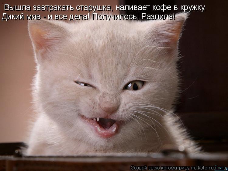Котоматрица: Вышла завтракать старушка, наливает кофе в кружку, Дикий мяв - и все дела! Получилось! Разлила!
