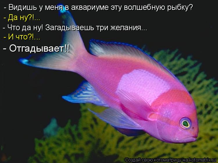 Котоматрица: - Видишь у меня в аквариуме эту волшебную рыбку?  - Да ну?!... - Что да ну! Загадываешь три желания... - И что?!... - Отгадывает!!
