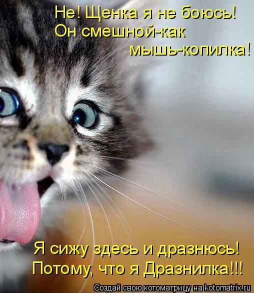 Котоматрица: Не! Щенка я не боюсь! Он смешной-как   мышь-копилка! Я сижу здесь и дразнюсь! Потому, что я Дразнилка!!!