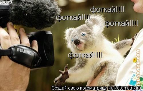 Котоматрица: фоткай!!!!  фоткай!!!!  фоткай!!!!  фоткай!!!!