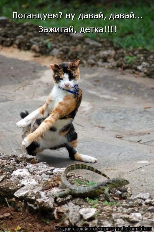 Котоматрица: Потанцуем? ну давай, давай...  Зажигай, детка!!!!