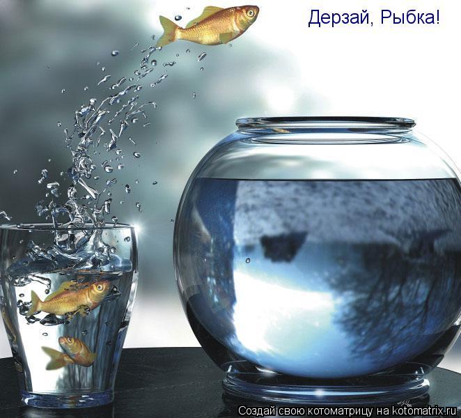 Котоматрица: Дерзай, Рыбка!